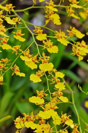 calyxes: Orchids in the garden