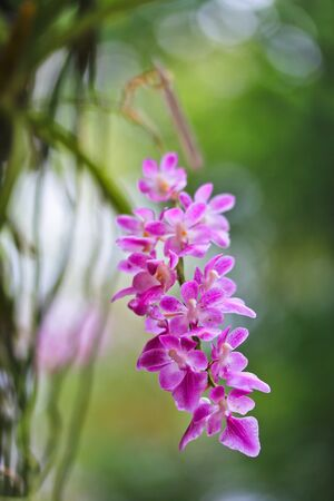 olant: Orchids in the garden