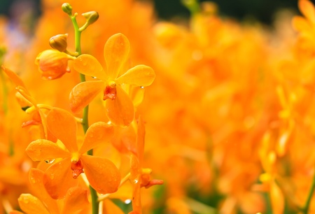 orchideae: Orchids in the garden
