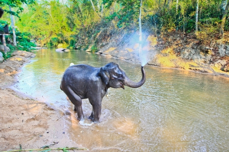 Elephant bath at chiang mai in thailand Stock Photo