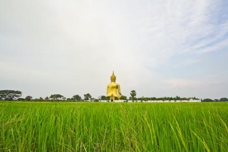 paddy field: Big buddha statue at Wat muang, Thailand