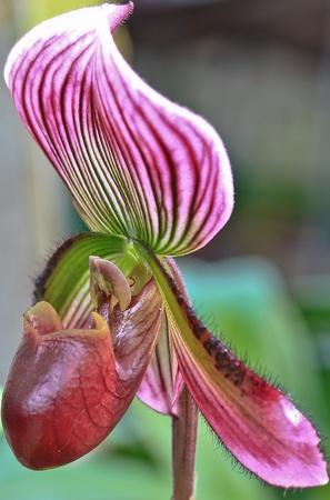 orchideae: Orchid Garden