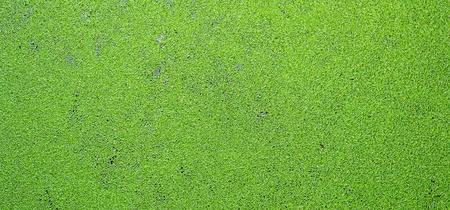 duckweed: green backgrounds
