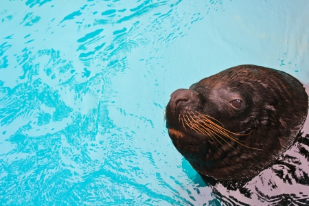 harbor seal zoo  photo