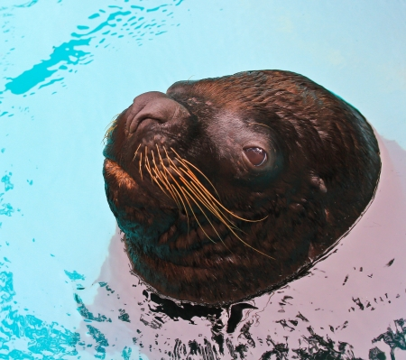 harbor seal zoo  photo