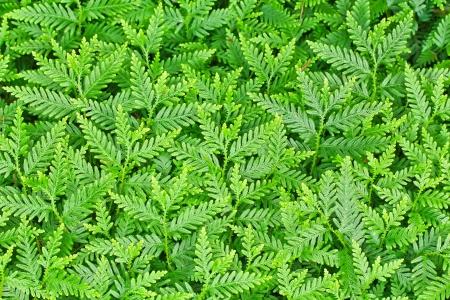 Green Leaf background Stock Photo - 14422702