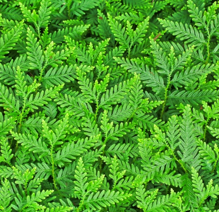 Green Leaf background Stock Photo - 14422028