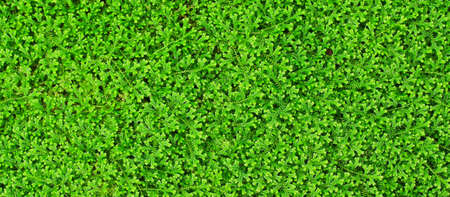 Green Leaf background Stock Photo - 14422634