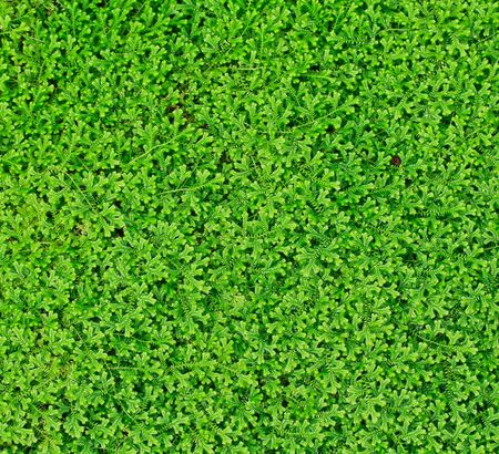 Green Leaf background, Stock Photo - 14422684