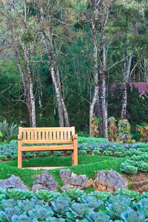 Chair in the garden  photo