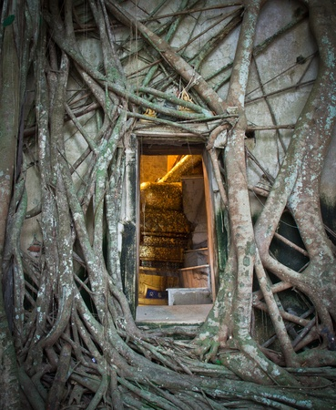 Ancient Buddhist church surrounded by tree roots in Thailand,Asi  photo