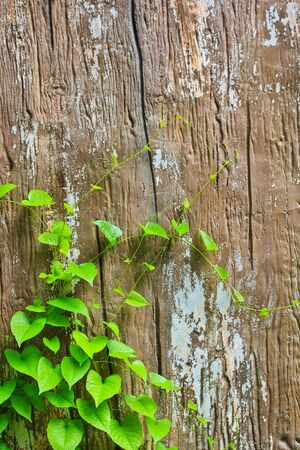 green Vine backgrounds  photo