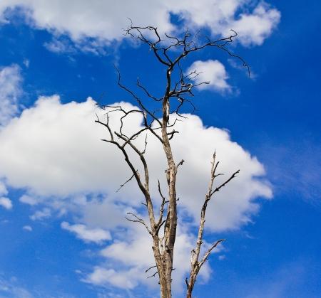 arboles secos: Los �rboles muertos