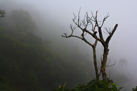 pa: Pa Hin Ngam National Park,Thailand  Stock Photo