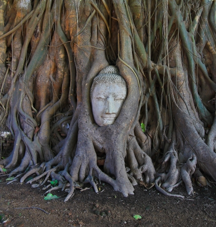 Buddha s head old buddha Temple wat phramahathat of Ayuthaya Province Thailand