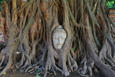 prayer tower: Buddha s head old buddha Temple wat phramahathat of Ayuthaya Province Thailand  Stock Photo