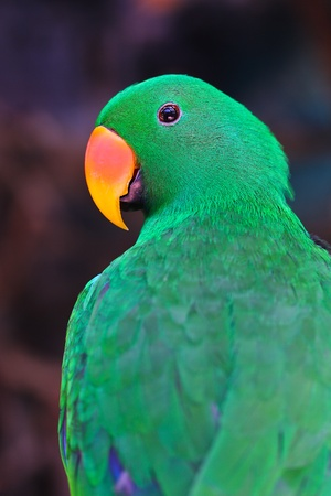 Nice parrot with a lot of green colours in zoo Stock Photo - 15188590