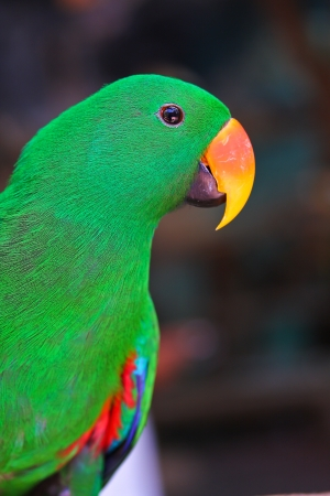 Nice parrot with a lot of green colours in zoo  photo
