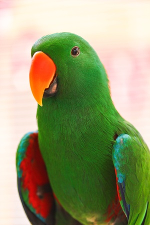 Nice parrot with a lot of green colours in zoo Stock Photo - 15188542