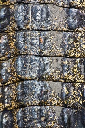 crocodile  Skin  Stock Photo - 15188702