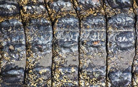 crocodile  Skin Stock Photo - 15188709