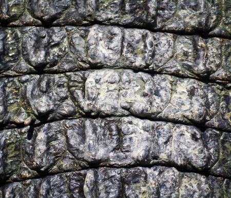 crocodile  Skin  Stock Photo - 15188686