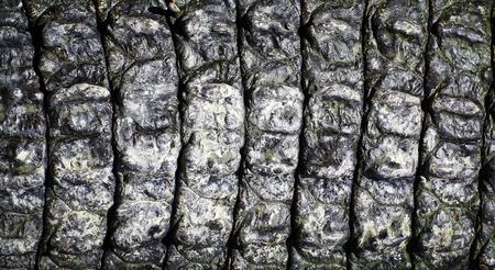 crocodile  Skin  Stock Photo - 15188780