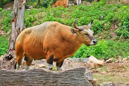 bos: Red Bulls