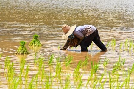 asian farmer