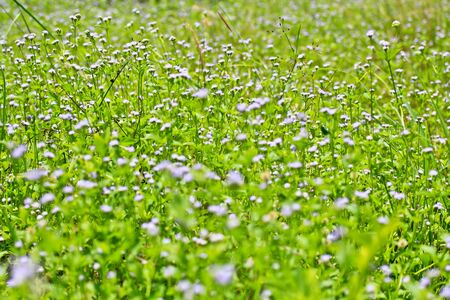 Wildflowers grass