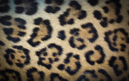 background, Leopard skins  photo