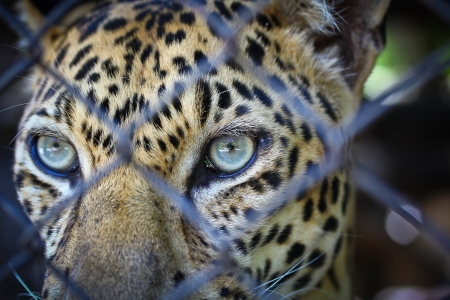 Leopard page  Stock Photo - 14885220