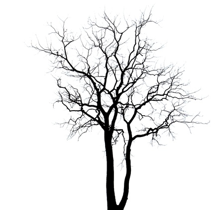 toter baum: dead tree background