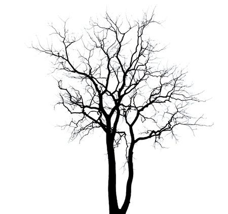 arboles secos: Fondo de �rboles muertos