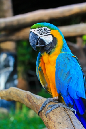 macaw: colorful macaw