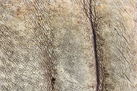 Rhino skin texture background photo