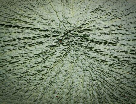 65279;leaf lotus photo