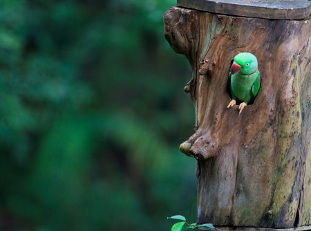 Colorful parrot Beautiful  photo