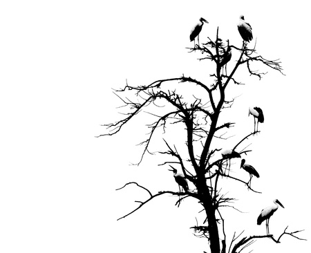 dead tree and bird background  photo