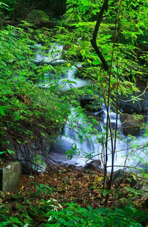 waterfall in the Forest National park thailand Stock Photo - 16417836