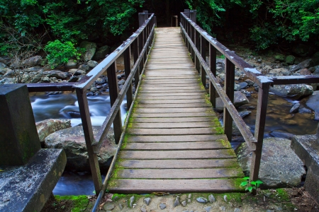 Bridge over the waterfall in Forest  photo