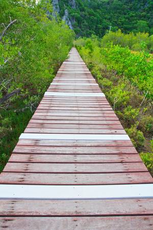 Boardwalks Mangrove forest  Stock Photo - 16417794