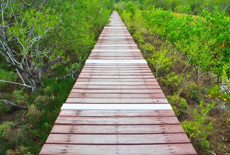 Boardwalks Mangrove forest  photo