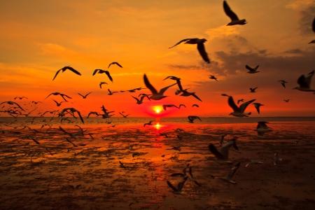 Закат на море много летает чайка