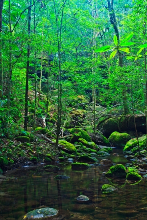 Tropical Rainforest Landscape, Thailand, Asia  photo
