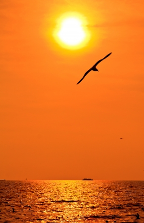 Sunset at sea many seagull flying  photo