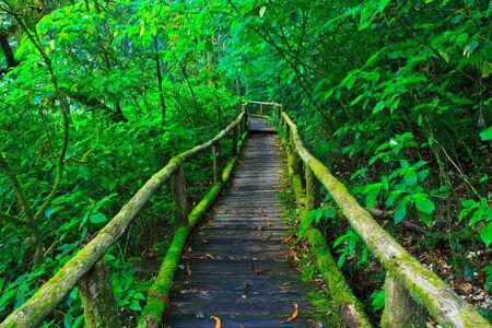 rain forest: tropical rain forest path asia thailand