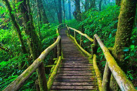 tropical lluvia bosque camino asia tailandia