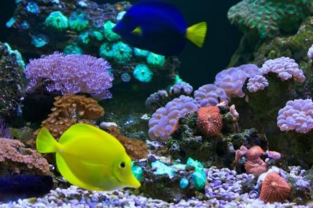aquarium  Coral Stock Photo - 18425390