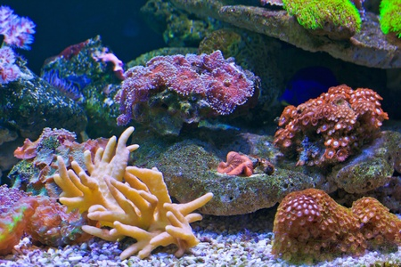 aquarium  Coral Stock Photo - 18425403